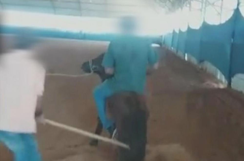 Polícia Civil investiga denúncia de maus-tratos a animais em Avaré