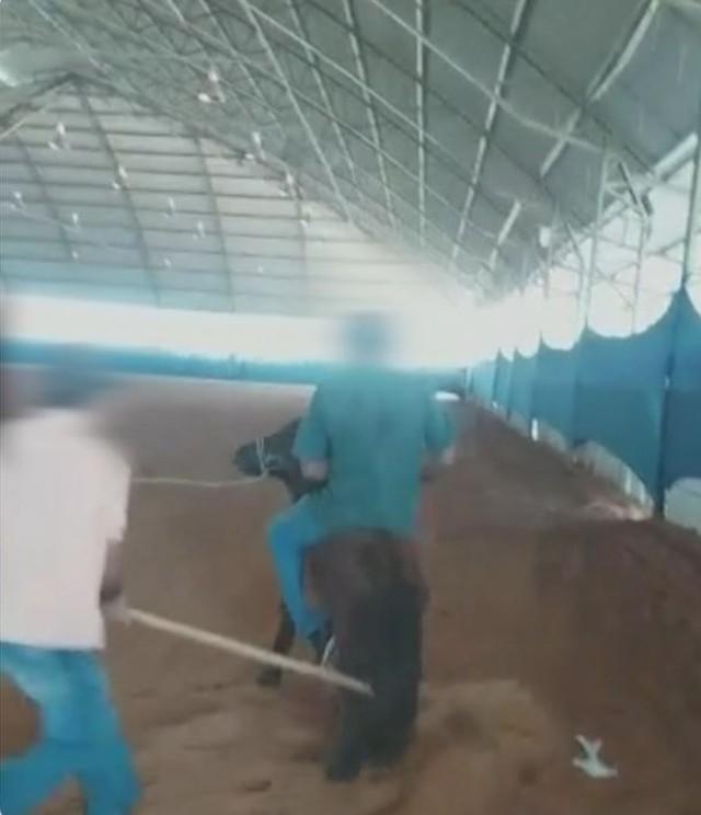 Denúncia de maus-tratos foi registrada na polícia em Avaré (SP) — Foto: Reprodução/TV TEM
