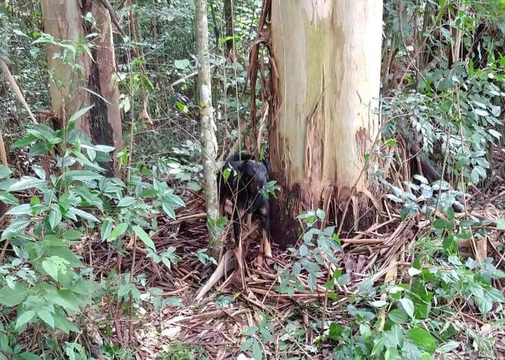 Cachorro estava acorrentado à árvore no Horto Florestal de Avaré (SP) — Foto: A Voz do Vale/Divulgação