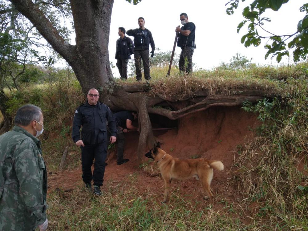 Com cães farejadores, Polícia Civil encontra drogas e prende 4 por tráfico em Avaré